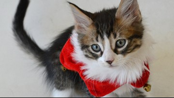 Montgomery County is waiving pet adoption fees for the holidays