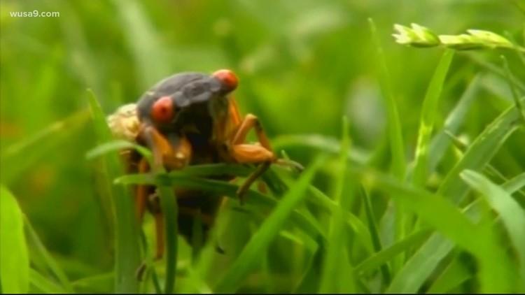 Brood X cicadas delay White House press plane | It's A DC Thing