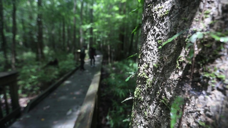 Discovering Virginia: A look at the Great Dismal Swamp