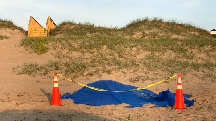 No charges after wild horse struck, killed in Corolla