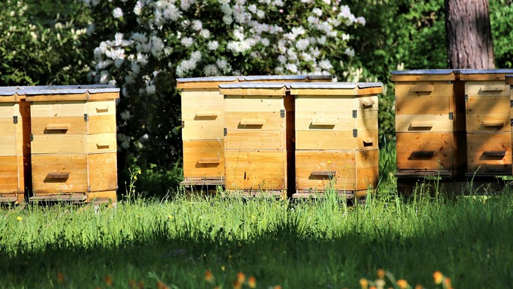 Free beehives? Yes, please. Virginia opens application window for Beehive Distribution Program