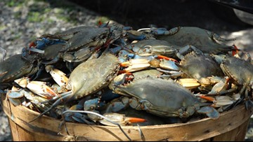 Number of blue crabs in Chesapeake Bay up 60% from last year
