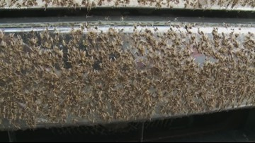 Bugs swarm Louisiana bridge, cause lower visibility for drivers