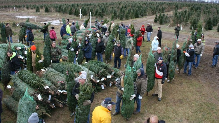 This farm donated Christmas trees to military families